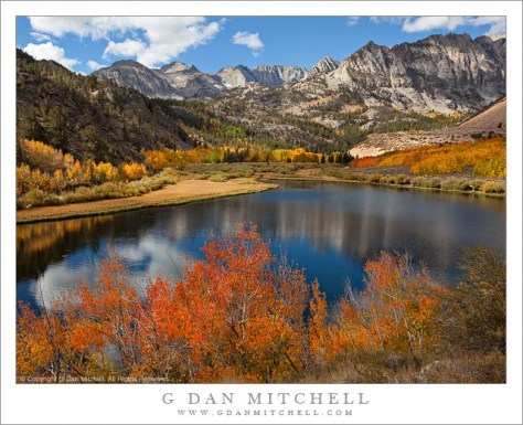 Aspen Color, North Lake