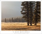 Trees and Meadow, Morning