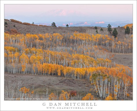 Boulder Mountain Aspens and Distant Peak - A distant peak in alpenglow above the fall aspen color on Boulder Mountain, Utah