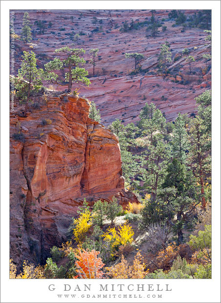Canyon Bottom, Red Rock, and Trees - Red rock sandstone terrain, trees, and brush line a canyon bottom in the high country of Zion National Park