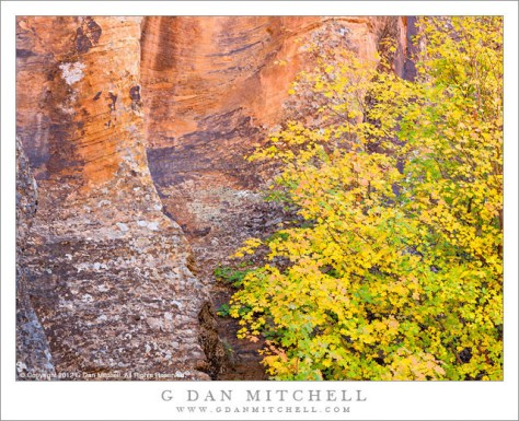 Autumn Maple Tree, Slot Canyon