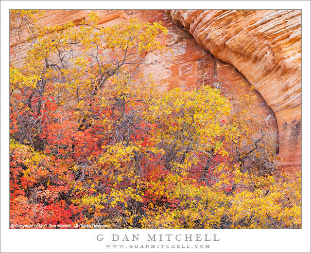 Red and Yellow Leaves, Sandstone Wall