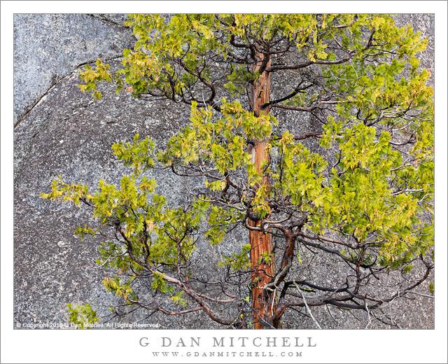 Tree and Granite Wall