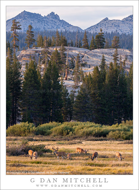 Grazing Deer, Ragged Peak