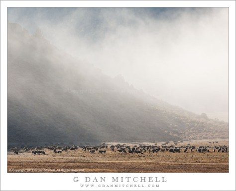 Sheep, Morning Fog