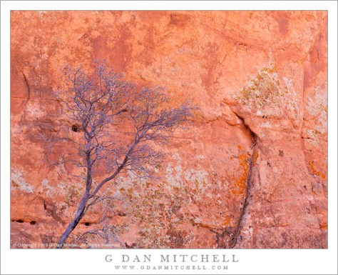 Bare Tree, Redrock Cliff