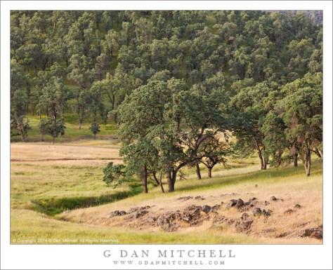 Spring Oaks, Sierra Foothills
