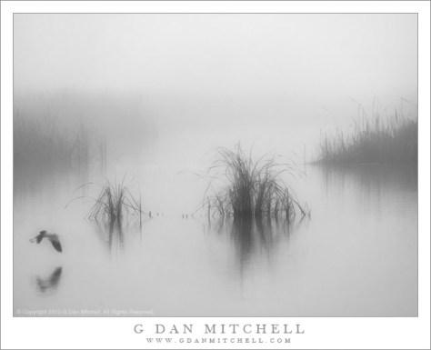 Tule Fog, Marsh