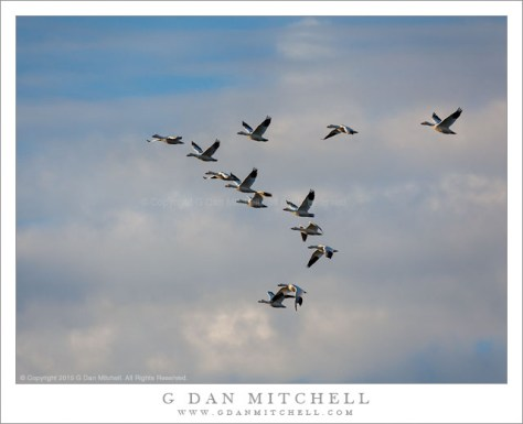Ross's Geese, Clouds
