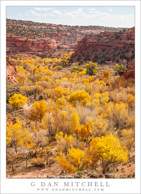 Cottonwood Trees and Redrock Canyon, Autumn