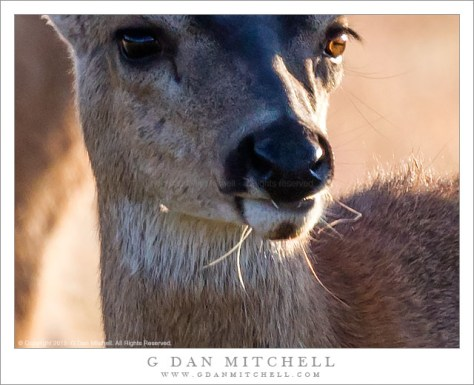 Deer — 100% magnification crop at 600 x 450