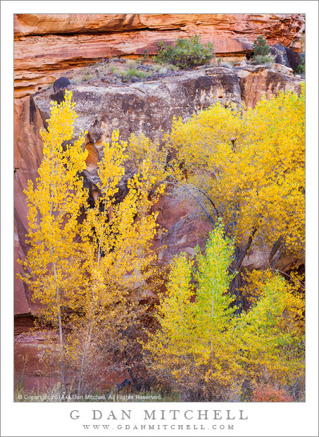 Fall Foliage, Sandstone Canyon