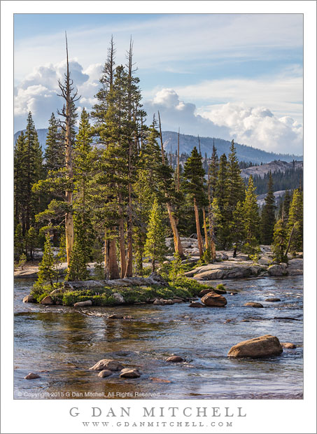 Island and Trees, Tuolumne River