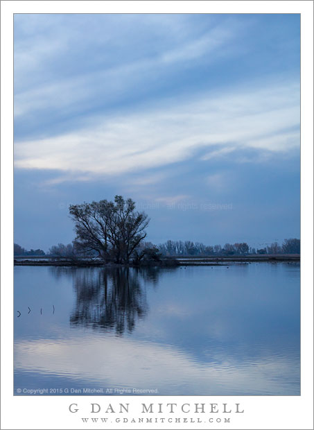 Blue Hour, Wetlands