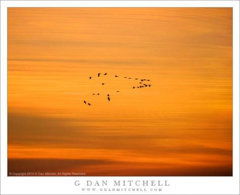 Cranes, Dusk Sky