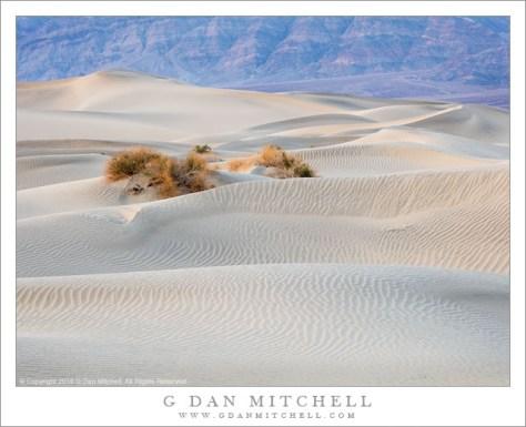 Dunes, Plants, Evening