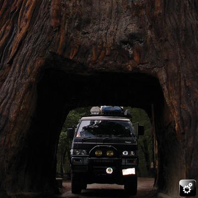 Ari's Delica: Bigger than the biggest tree! (Or hole through the biggest tree!)