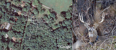 Deer Tracker in Google Earth