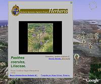 Chilian Herbarium in Google Earth