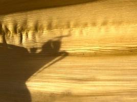 Praying Mantis Shadow Theatre
