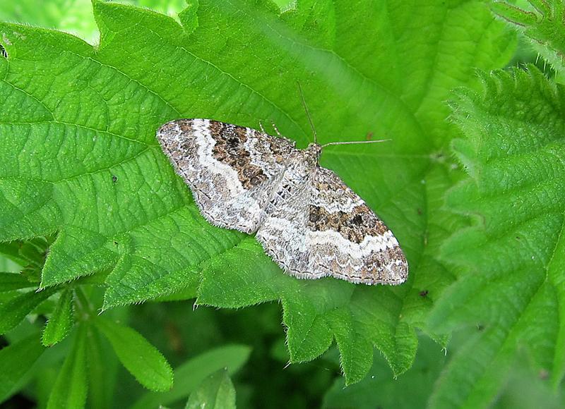 Moths And Butterflies Gedling Conservation Trust