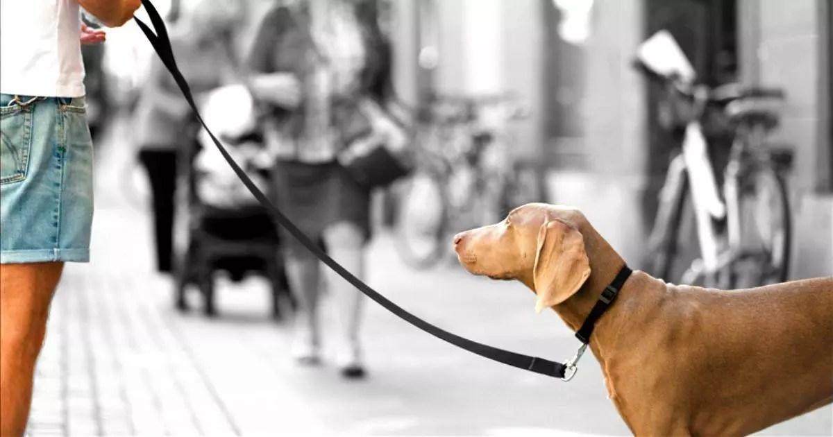 Si tu perro tira de la correa, lo puedes solucionar