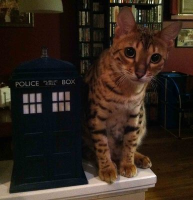 Tardis Talking Cookie Jar 2