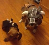 Hand Crocheted Skyrim Dog Costumes Are a Fantastic Idea ...