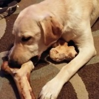 POD: Rubys new bone