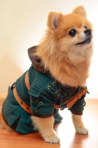 Adorable Dog Cosplay