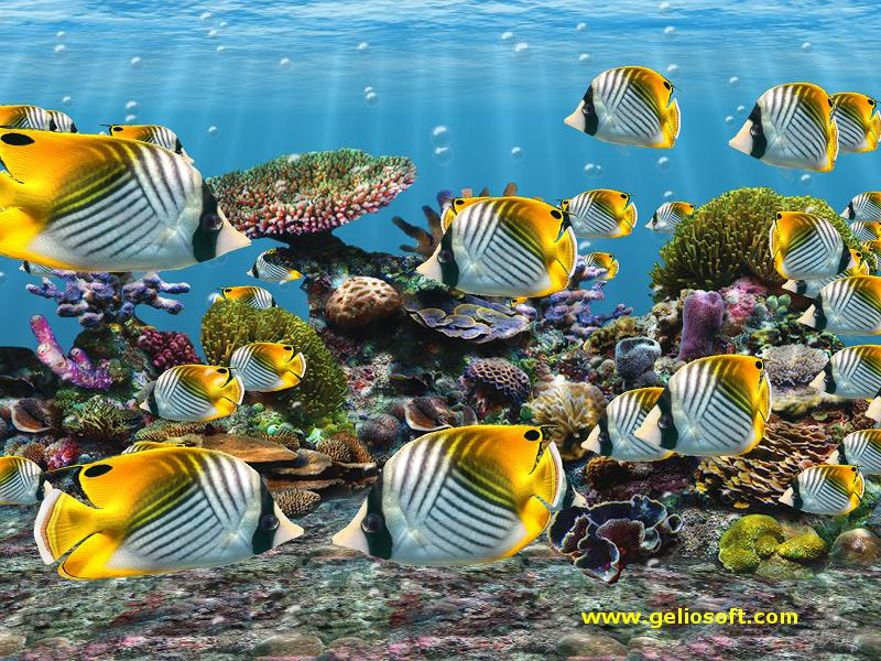 Live Animated Wallpapers For Windows 7 Free Download Full Version Auriga Butterflyfish Screensaver And Free Wallpaper
