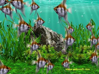 Live Animated Wallpapers For Windows 7 Free Download Full Version Moving Angelfish Screensaver And Free Wallpaper
