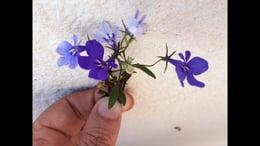 Streetflowers