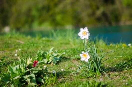 Draussen die Blumen, drinnen die Ideen: Es blüht im und um's Thun-Panorama.