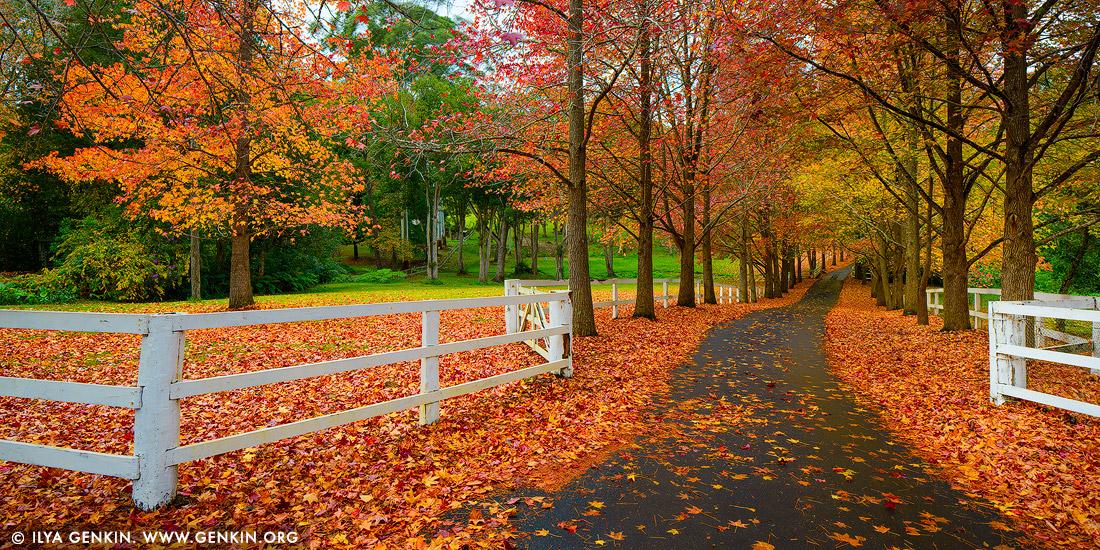 Free Fall Wallpaper Apps Autumn In Matcham Print Photos Fine Art Landscape