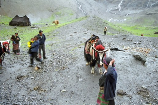 Viaggiare spostarsi con gli yak, Tibet 1999