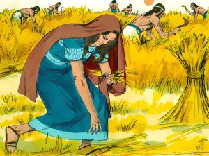 Ruth Reaping Grain