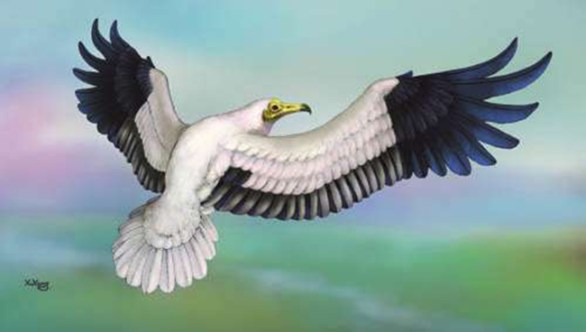 New old world vulture found-GeologyPage