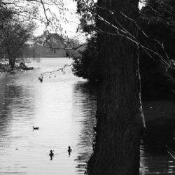 Roath Park Lake, Cardiff