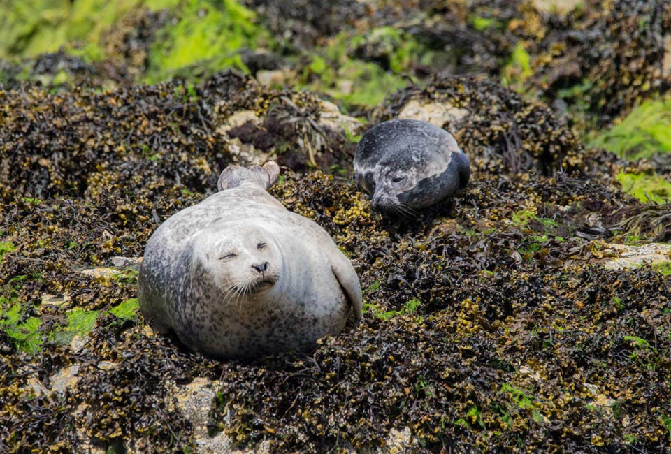 Wildlife-photography-grey-seal-and-pup