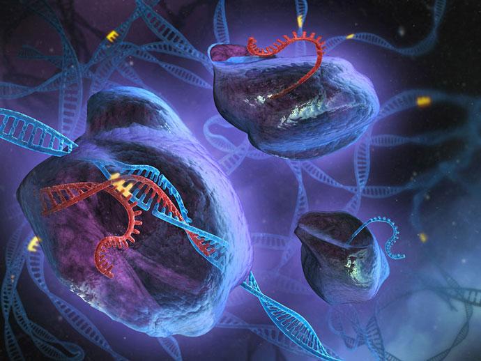 CRISPR Genetik Aracı Musküler Distrofili Farelerin İyileştirilmesine Yardımcı Oldu