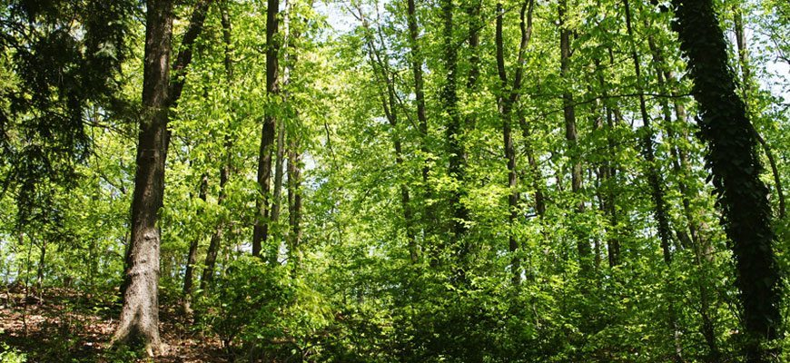 Hike Siegen Forest Trails in Germanna