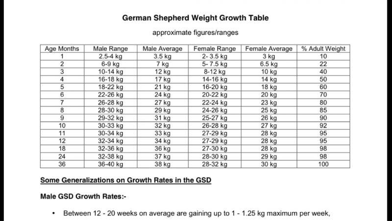 gsd puppy weight chart \u2013 ExploreDogs