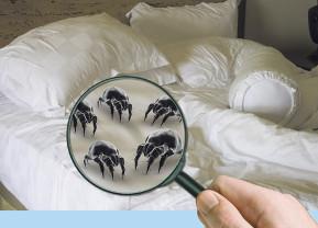 Allergie Kopfkissen Allergiker Kopfkissen Test Vergleich > Testberichte 2019 Milben – Kleine Monster Im Bett Gesundes Haus