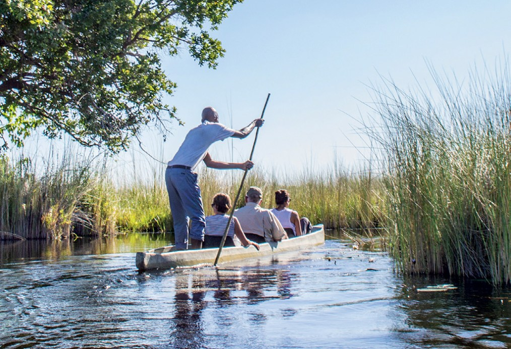 The Mokoro trips into the delta are a great way of getting to grips with the channels and spotting wildlife hiding in the papyrus.