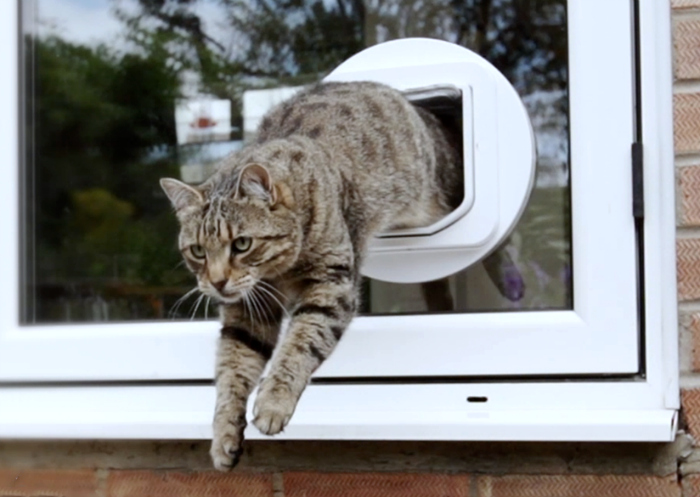 Make Your Cat Feel At Home With The Sureflap Microchip Cat