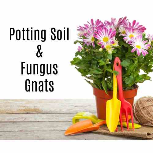 Medium Crop Of Home Depot Potting Soil