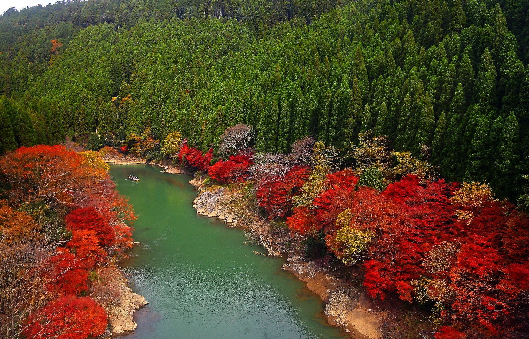 Free Fall Tree Wallpaper Kyoto The Best Destination In Japan Gets Ready