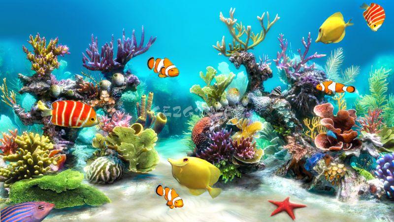 Live 3d Dolphin Wallpaper Sim Aquarium Live Wallpaper İndir Android Gezginler Mobil