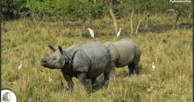 The ultimate wildlife experience at Kaziranga